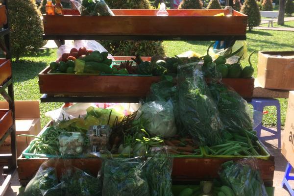 Kết quả triển khai một số chính sách hỗ trợ phát triển  hợp tác xã nông nghiệp trên địa bàn thành phố Hồ Chí Minh