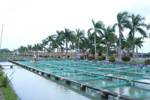 Hướng dẫn phân loại và đánh giá hợp tác xã  Nông nghiệp trong việc thực hiện  Tiêu chí 13 - tổ chức sản xuất