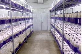 Trồng nấm ăn theo quy mô công nghiệp hiệu quả cao của Chị Hàng Châu Trang Tại Huyện Củ Chi