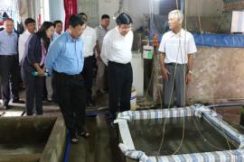 Sản xuất cá giống chất lượng cao của Ông Hoàng Minh Đức, Xã Thái Mỹ, Huyện Củ Chi