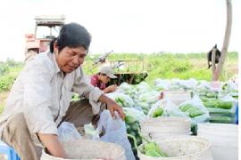 Đa dạng hóa trồng rau ăn quả của Ông Nguyễn Văn Trải, Xã Nhuận Đức, Huyện Củ Chi