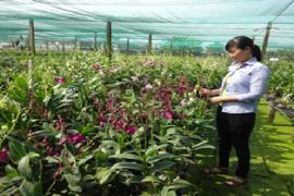 """Vườn lan """"Sơn Hà"""" của Chị Trần Thị Ngọc Thảo, Xã Đa Phước, Huyện Bình Chánh"""