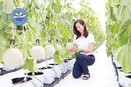 Ứng dụng công nghệ cao trong trồng dưa lưới của Anh Trang Quốc Dũng, Xã Đông Thạnh, Huyện Hóc Môn
