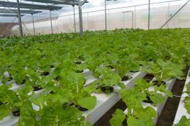 Nhiệm vụ, giải pháp phát triển công nghiệp chế biến nông lâm thủy sản  và cơ giới hóa sản xuất nông nghiệp