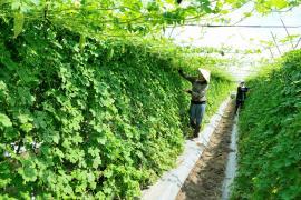 Kết quả thực hiện công tác phát triển nông thôn 9 tháng đầu năm 2017 của Chi cục Phát triển nông thôn Thành phố Hồ Chí Minh