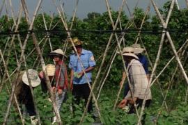 Dạy nghề cho lao động nông thôn trong lĩnh vực nông nghiệp tại Thành phố Hồ Chí Minh