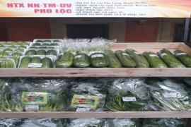 Hợp tác xã Nông nghiệp Thương mại Dịch vụ Phú Lộc