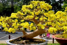Làng nghề hoa cây kiểng quận Thủ Đức