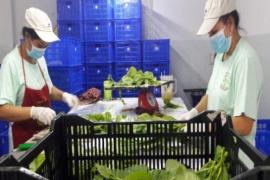 Hợp tác xã Thương mại - Dịch vụ - Sản xuất - Nông nghiệp Mai Hoa
