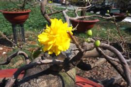 Làng nghề hoa cây kiểng quận 12